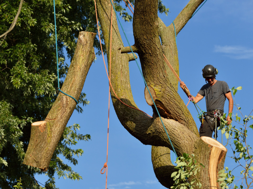 5 signs your tree is at risk of falling